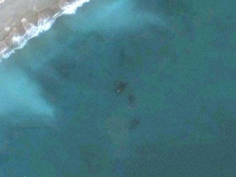 Google Earth上发现的鲸鱼