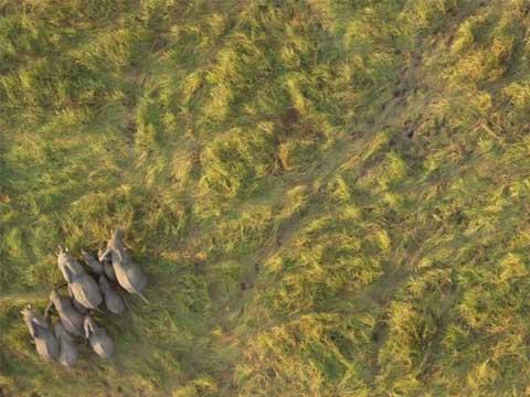 Google Earth下迁徙的大象
