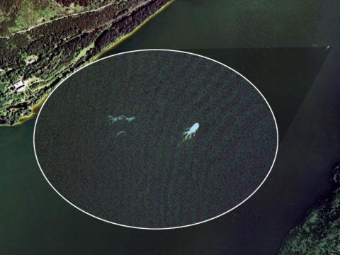 英国网民称用Google Earth发现尼斯湖怪