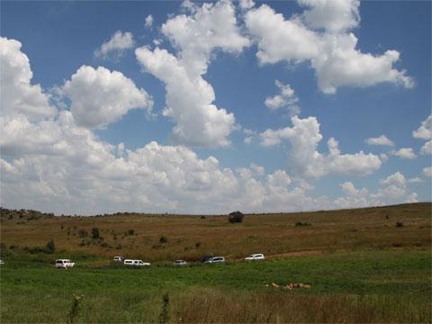 南非野生狮子园