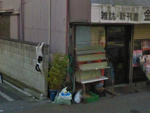 谷歌街景地图让一只东京白猫成名