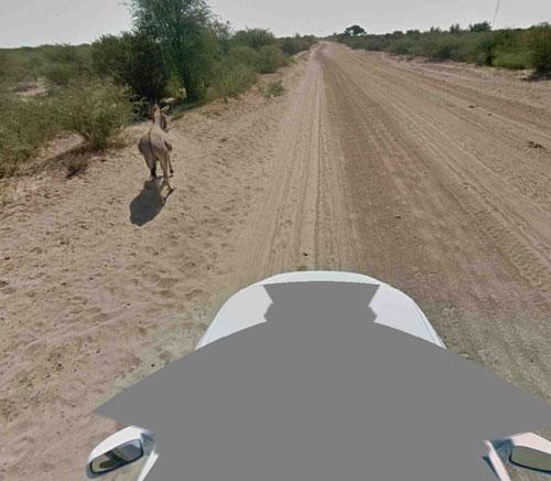 街景车没有撞死驴