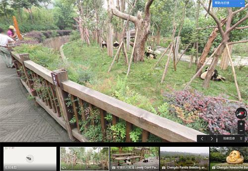 通过谷歌街景地图看成都大熊猫