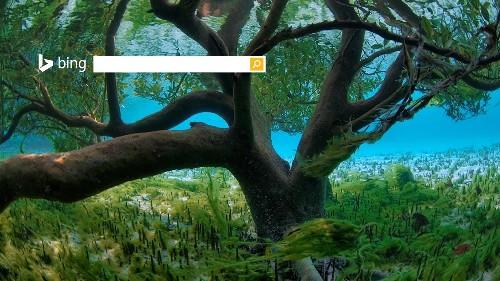 塞舌尔亚达伯拉红树林中的水下摄影